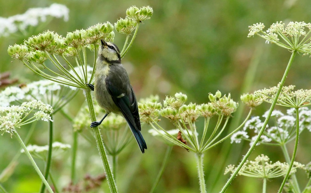native plants for indiana