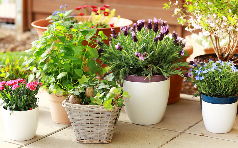 patio-containers-minimal-garden-indianapolis.png