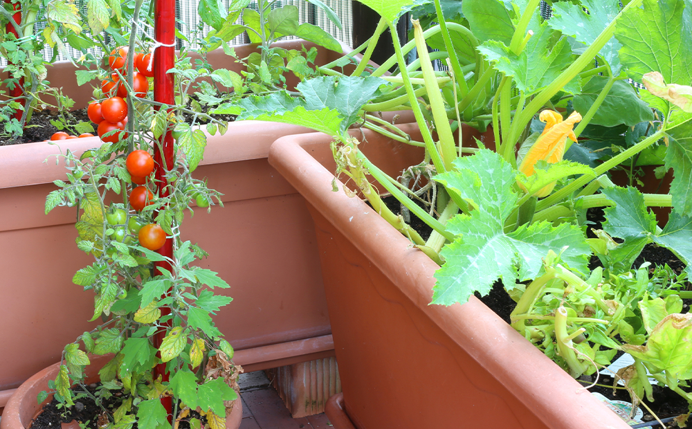 patio-balcony-vegetable-minimal-garden-indianapolis.png