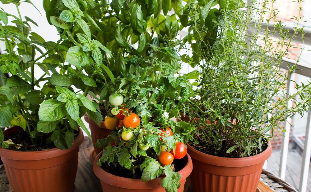 patio-minimal-garden-veggies-indianapolis.png