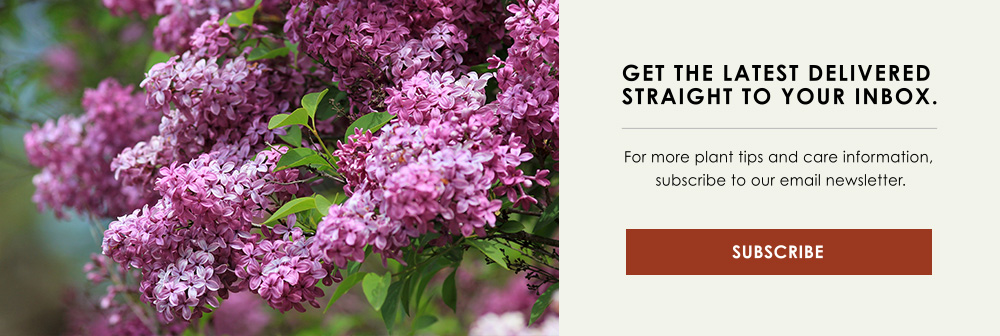 InBlog-CTA-flowering-shrubs-trees.jpg
