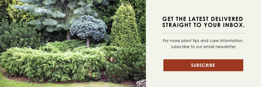 InBlog-CTA-benefits-evergreens-indianapolis.jpg