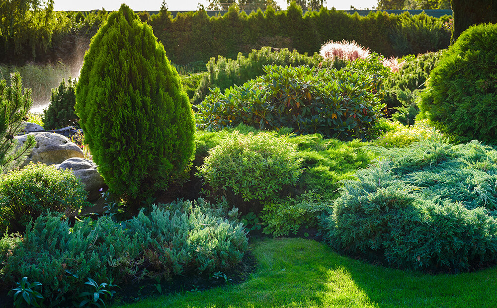 benefits-evergreens-trees-shrubs-backyard-indianapolis.jpg