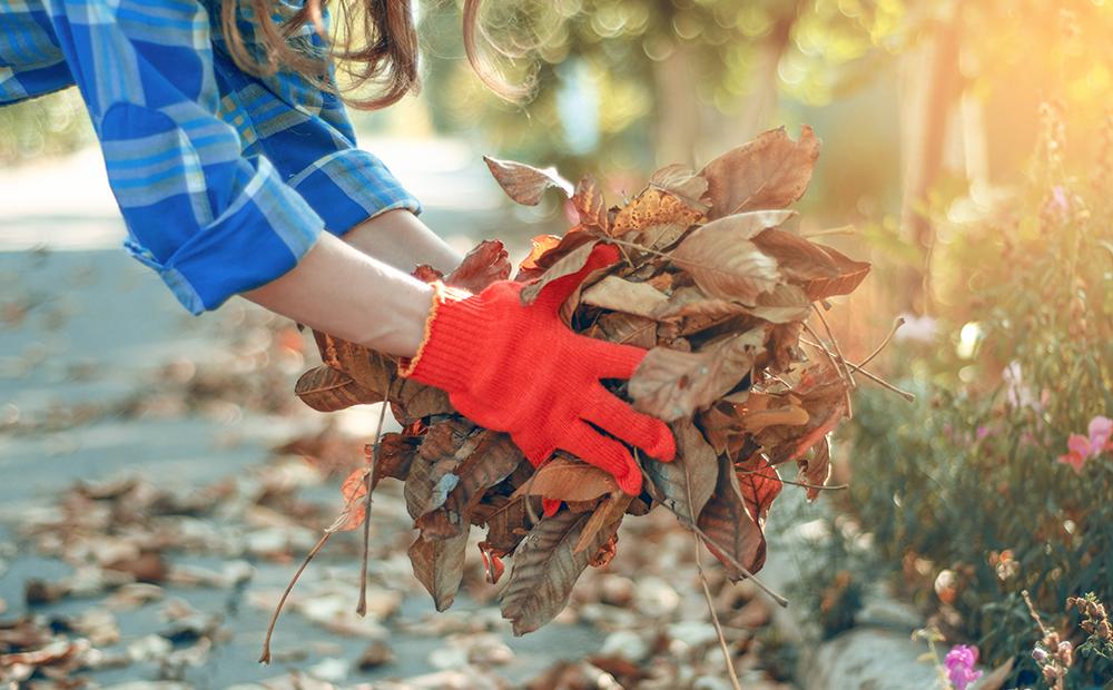 fall-cleanup-checklist-leaves.jpg