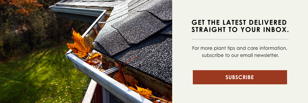 InBlog-CTA-fall-cleanup-checklist-clearing-gutters.jpg