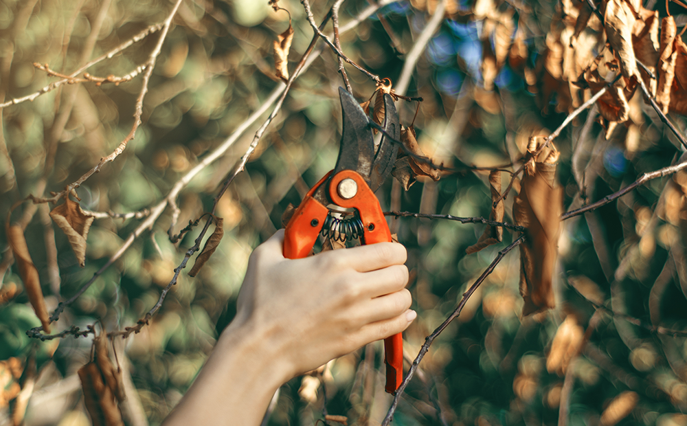 fall-cleanup-checklist-pruning.png