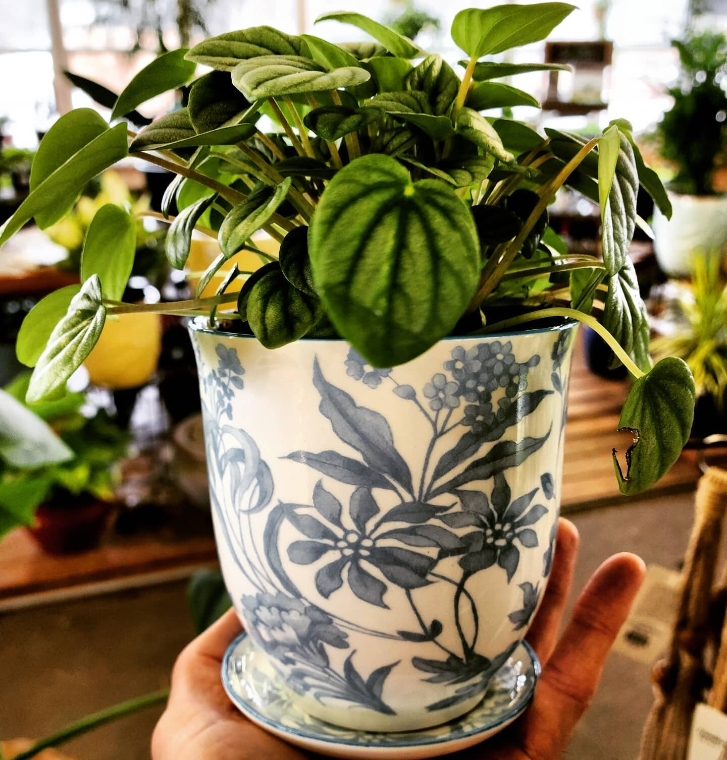 In case you didn't know...we offer a complimentary potting service 7 days a week! Pick out a pot and a plant and we will do the rest!  #dammannplants #dammannsgardenco  #houseplantpots #houseplants