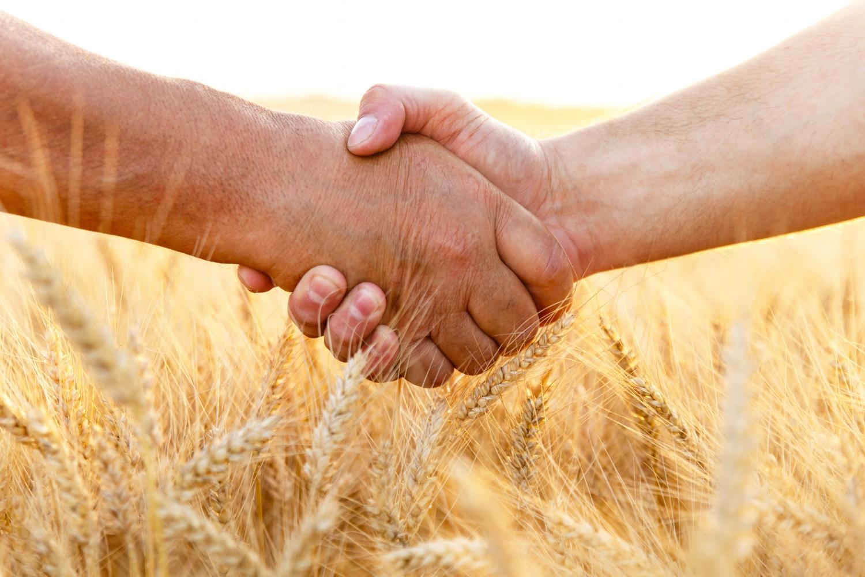 two people shaking hands in wheat field