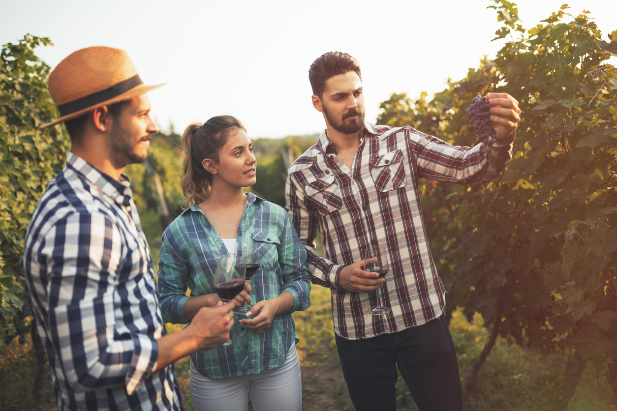 millenials at winery looking at grapes with glasses of wine in hand