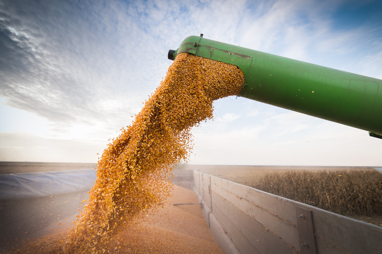 harvested corn loading into truck