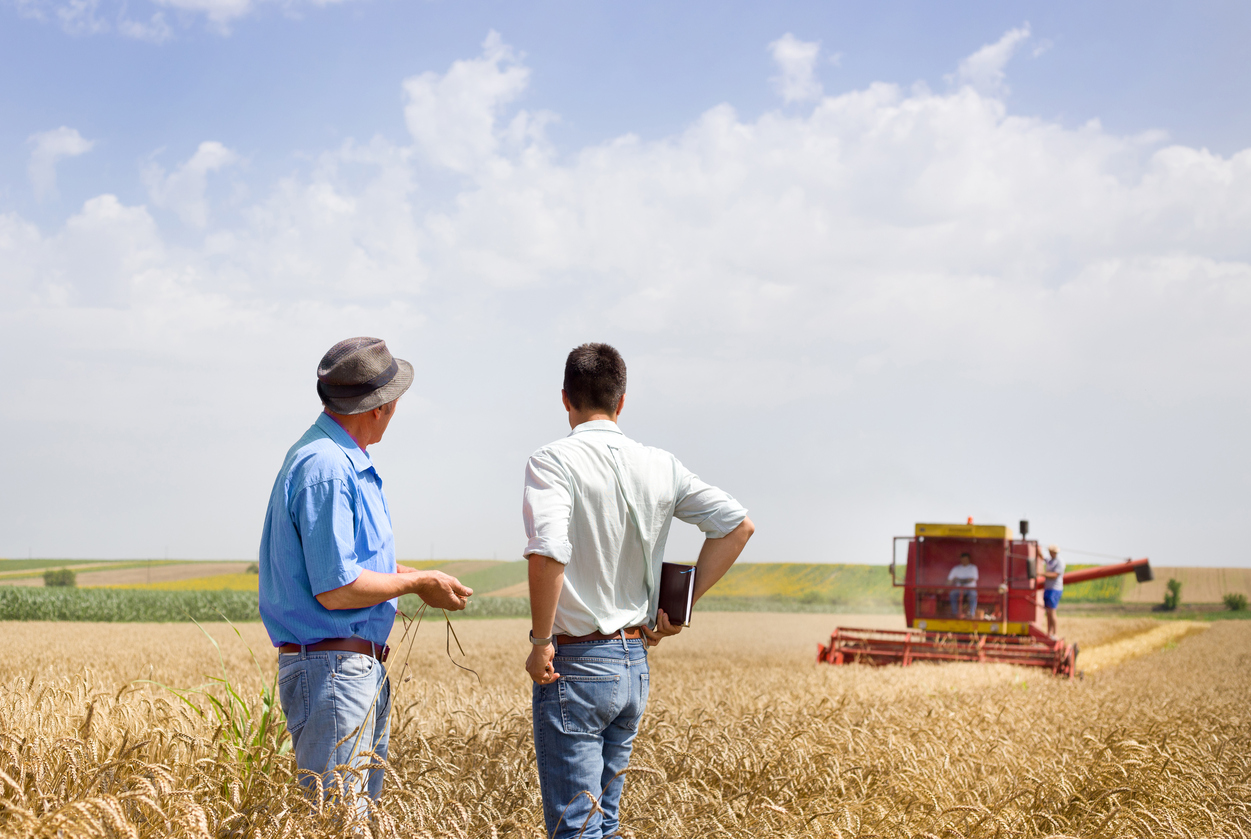 two farmers in wheat field with combine harvesting in the background