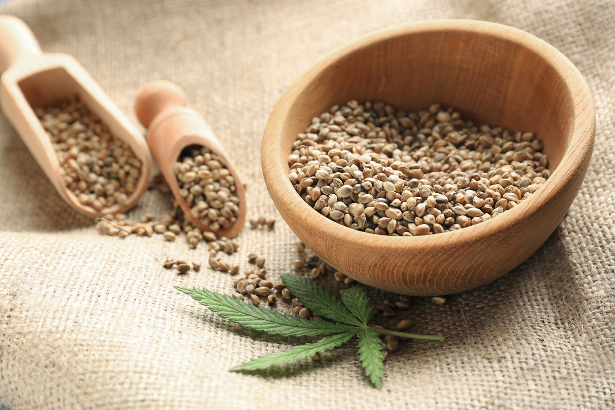 hemp seed in bowls with cannabis plant