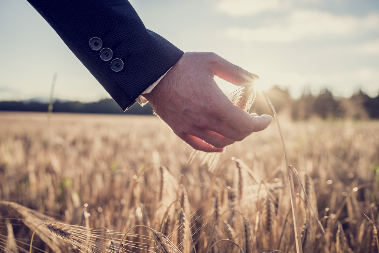 businessman holding wheat in field