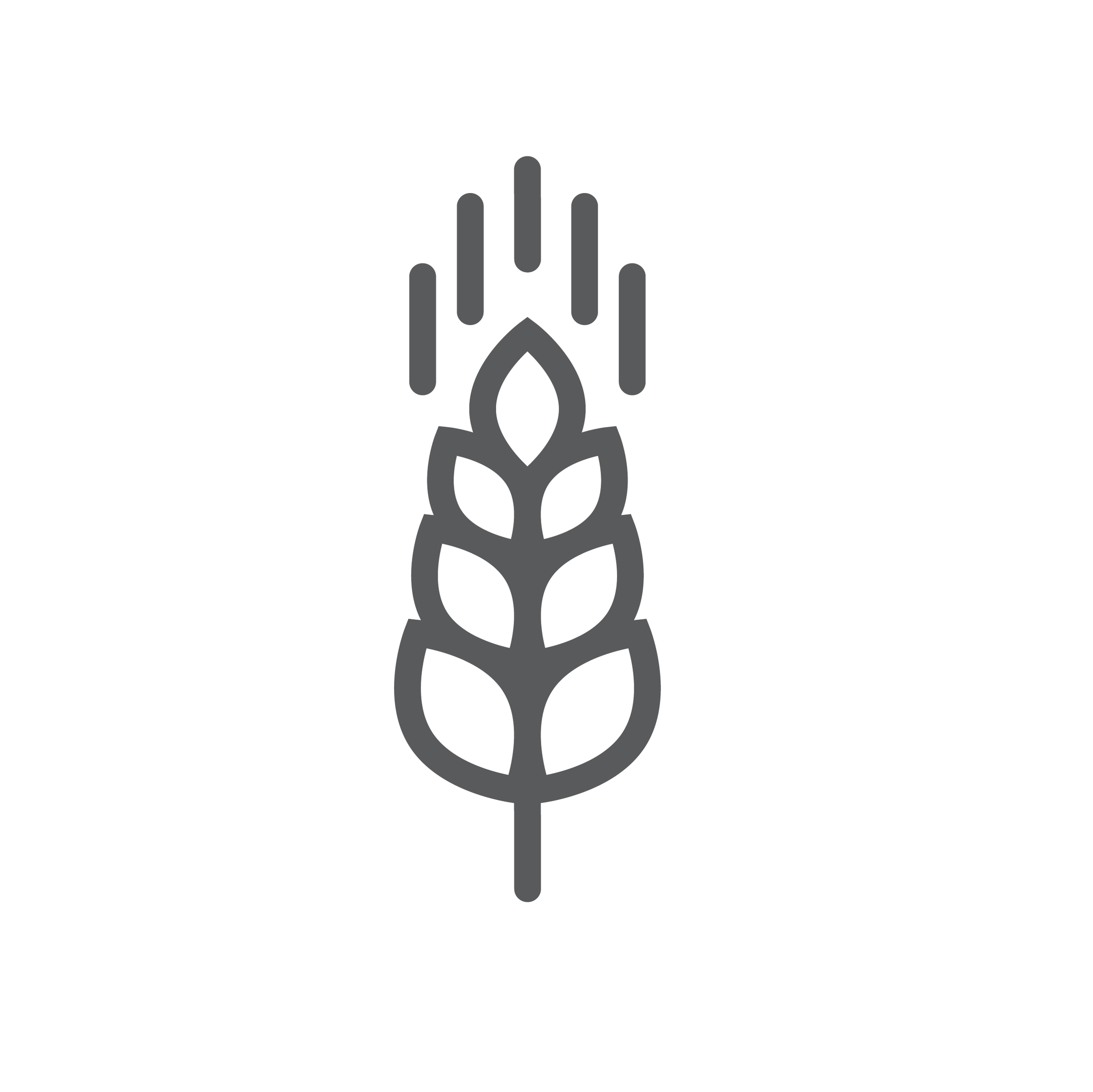 growing wheat graphic