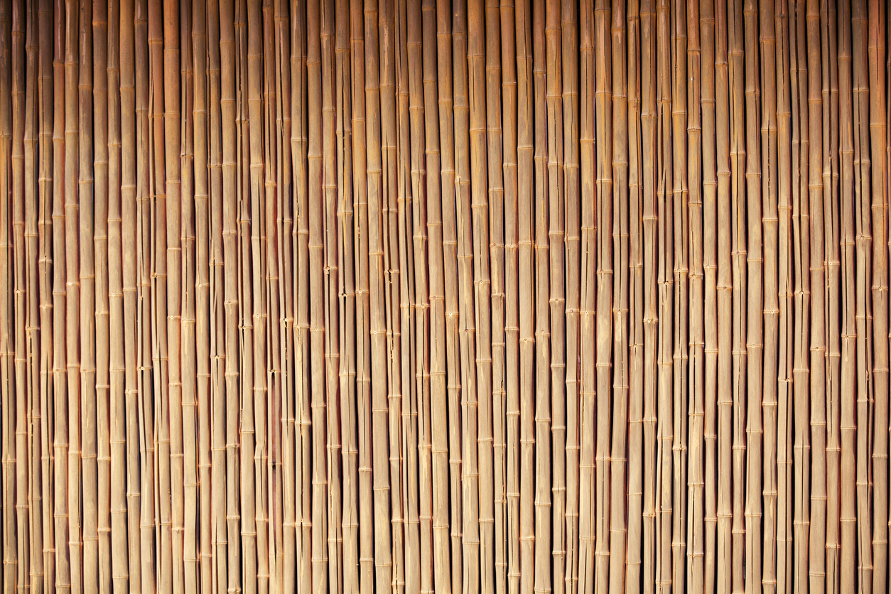 dried bamboo canes