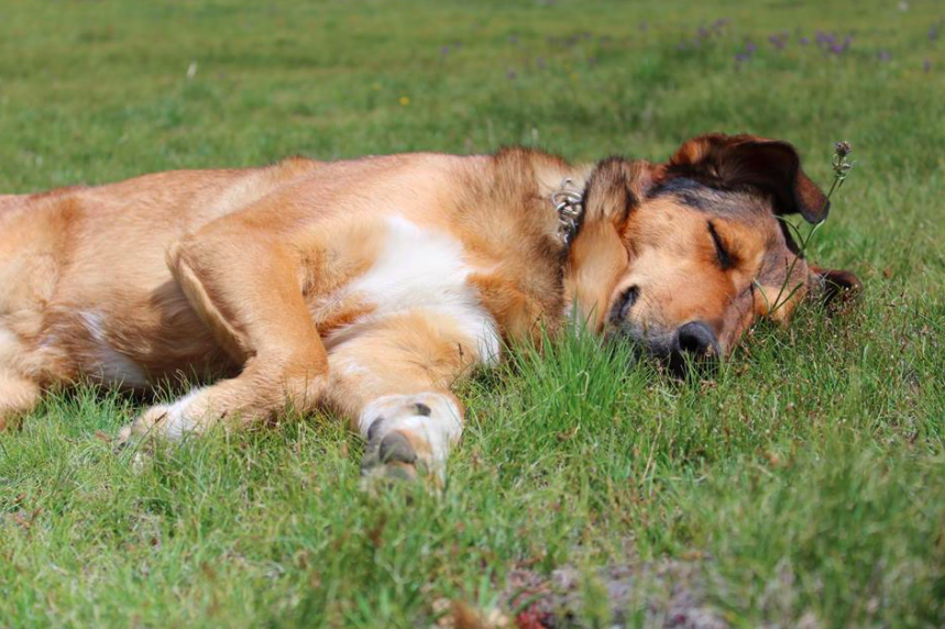 Xena enjoying a snooze. Photo by George Fogelson.