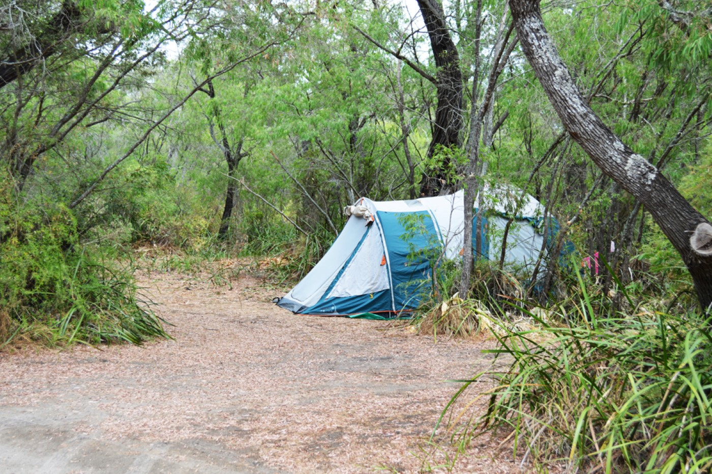 Camp among natural bushland