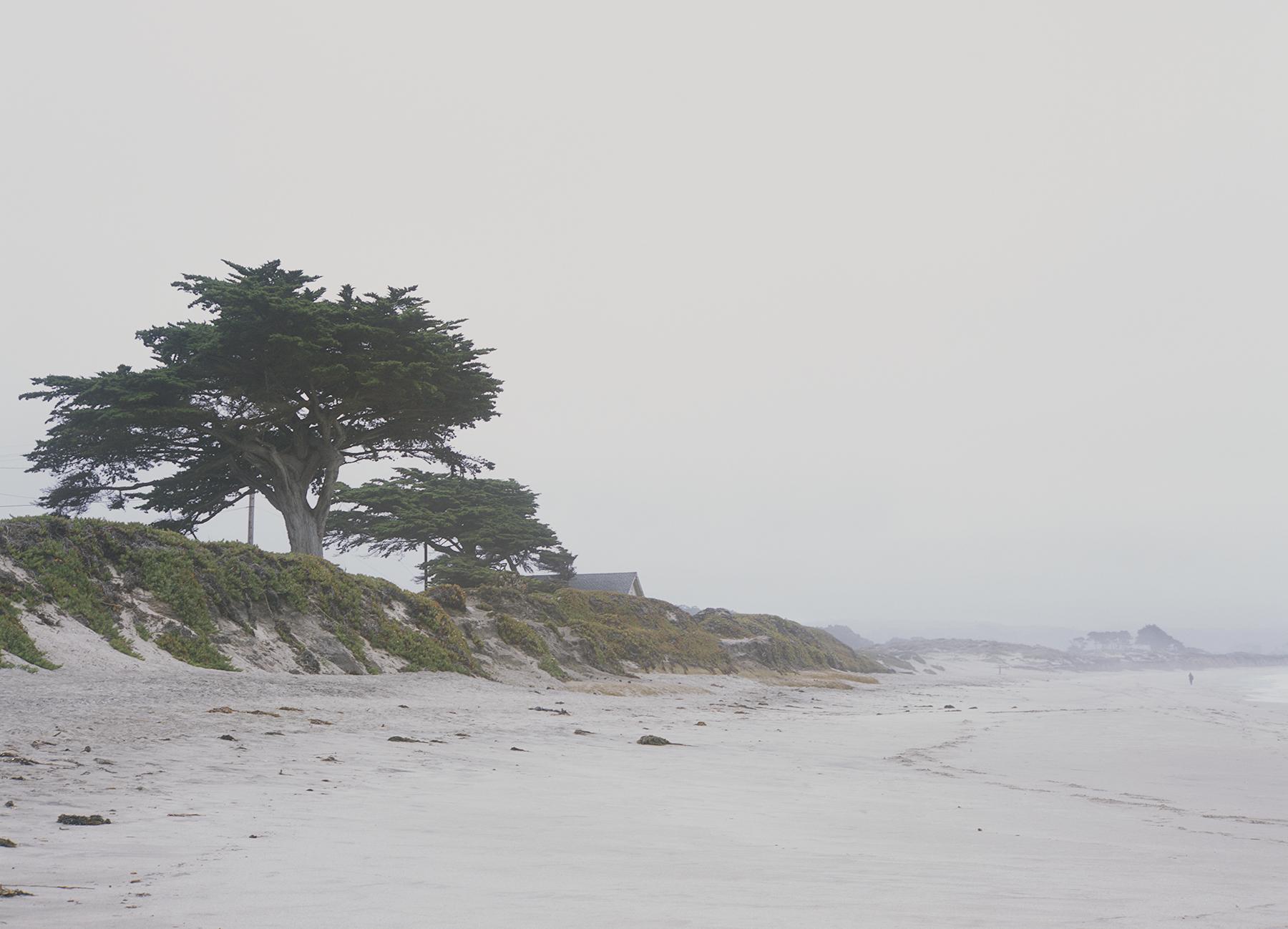 Half Moon Bay, 2018