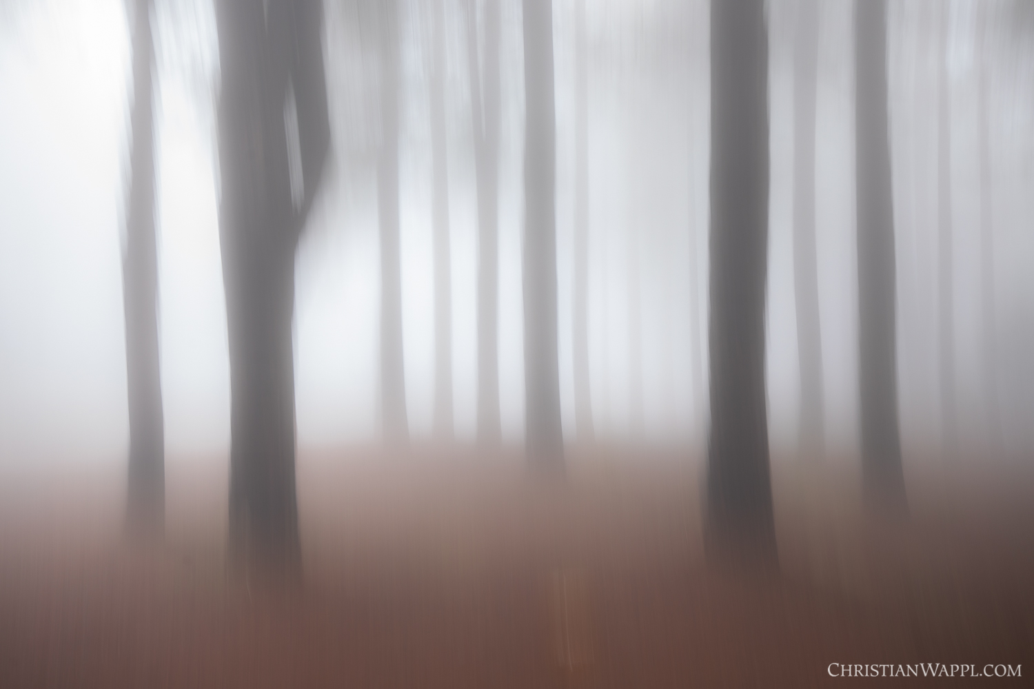 Abstract vision of the misty coniferous forest