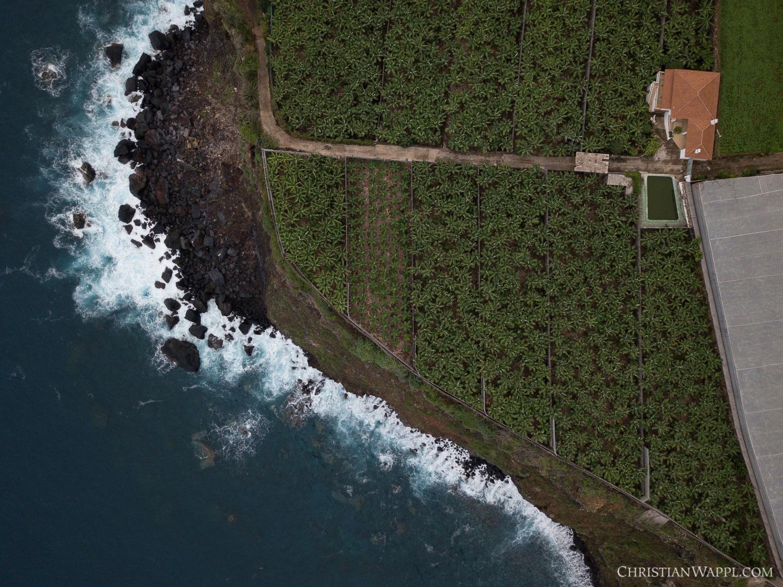 Aerial view of a banana plantation