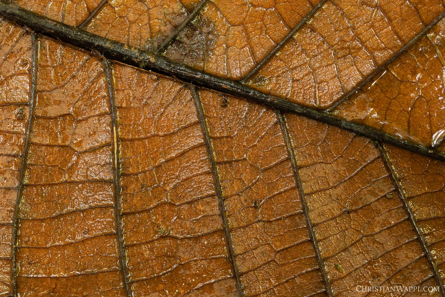 Detail of a dead leaf