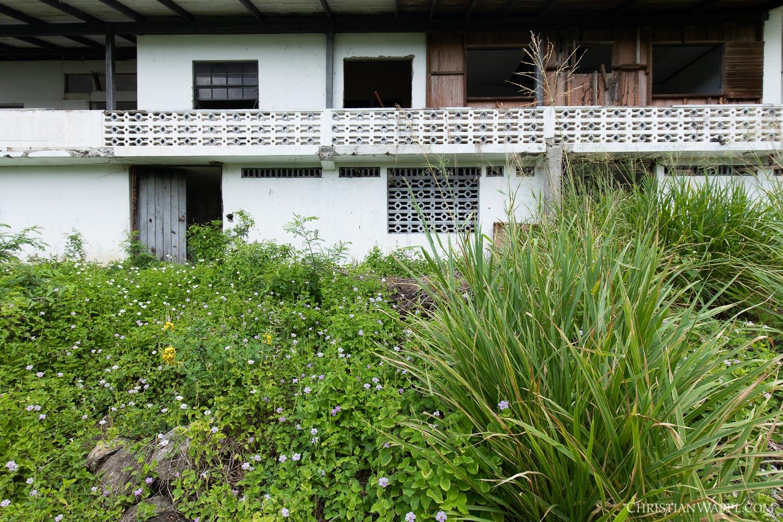 Backyard of the bat house