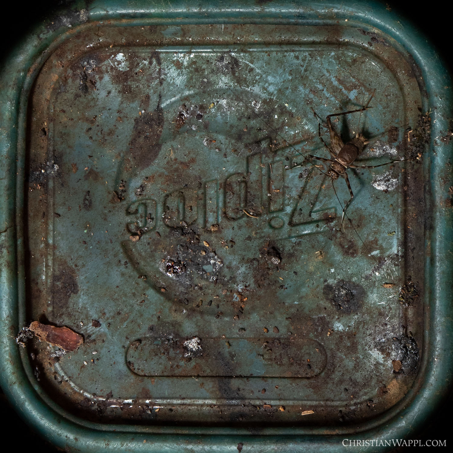 Cave-dwelling cricket on a discarded lunch box