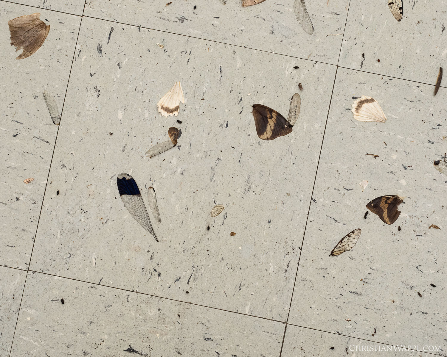 Remains of insects devoured by bats inside an army barracks, Panama