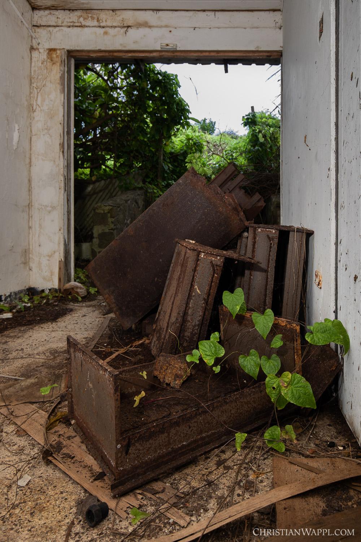 Plants growing inside a diplomat's villa, Grenada