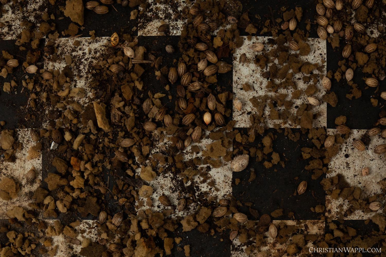 The seeds of fruit eaten by Jamaican fruit bats ( Artibeus jamaicensis ) litter the floor of a diplomat's villa, Grenada