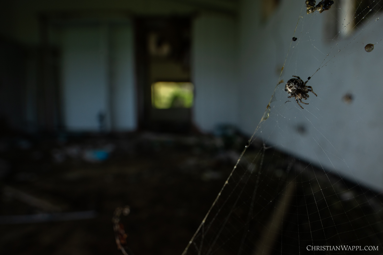 Orb-weaver spider (Araneae) in a diplomat's villa, Grenada