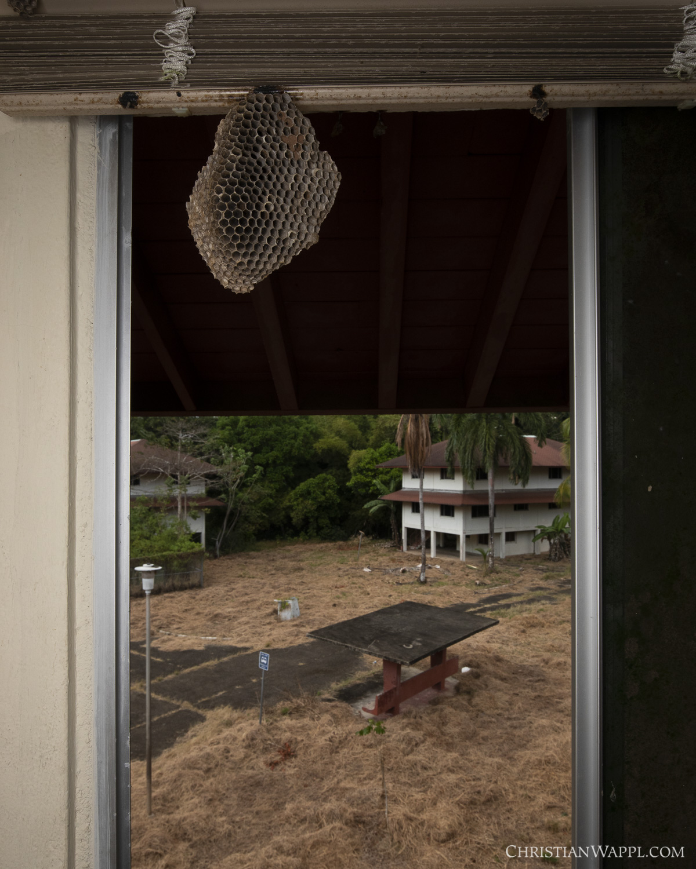 Wasp nest inside army barracks, Panama