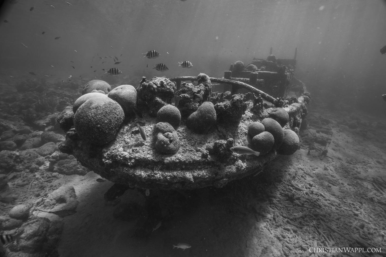Invertebrates colonising the tugboat wreck