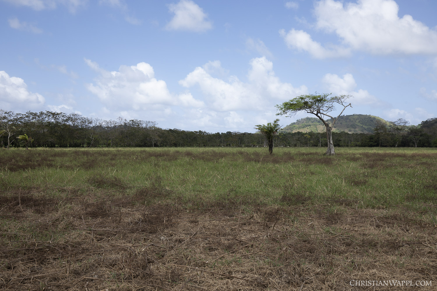 Land cleared for agriculture