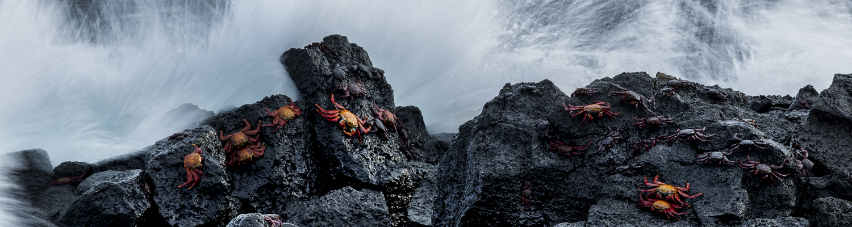 Galápagos Islands -
