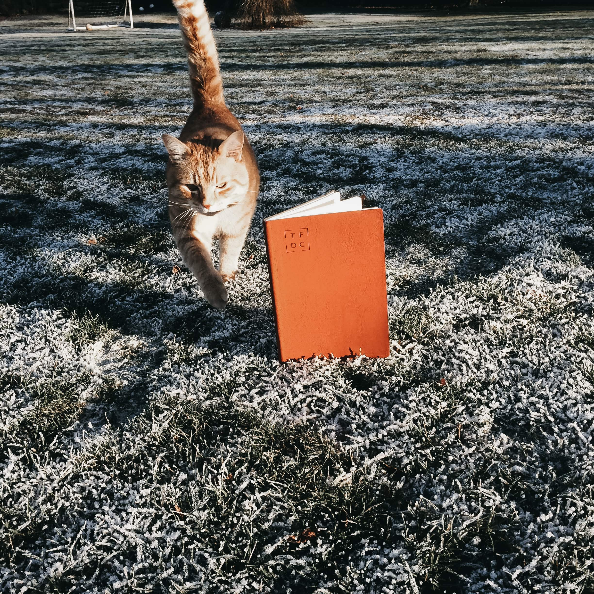 Eleanors diary on frosty grass with a ginger cat.jpg