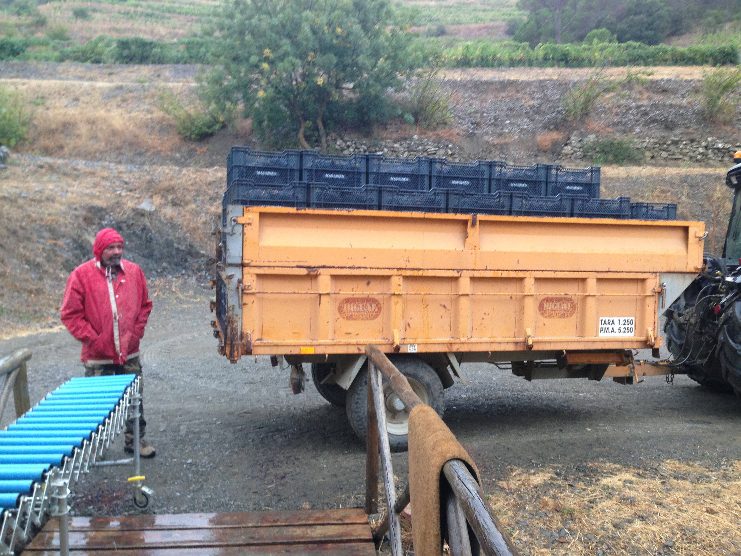 Brush-cutting time & Emilio Ready to off-load the grapes 2.jpg