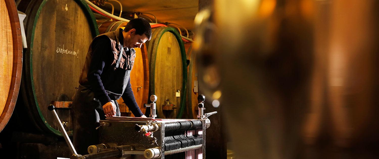 Weinbau der Lebenshilfe