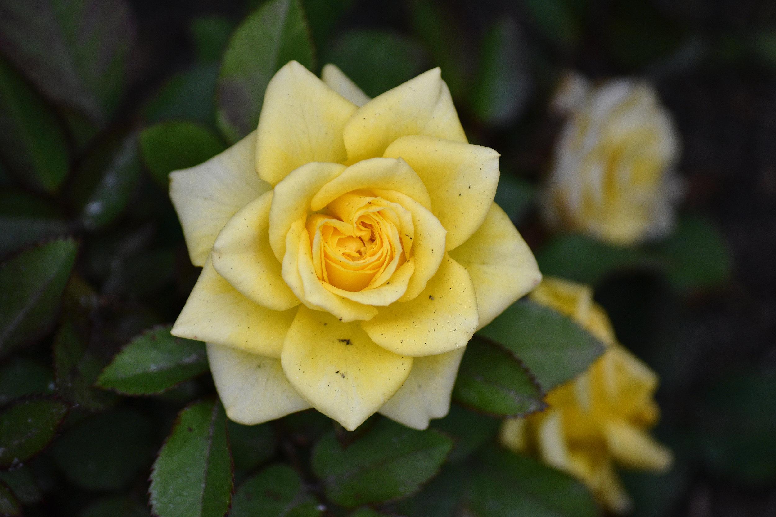 Flower Star.jpg