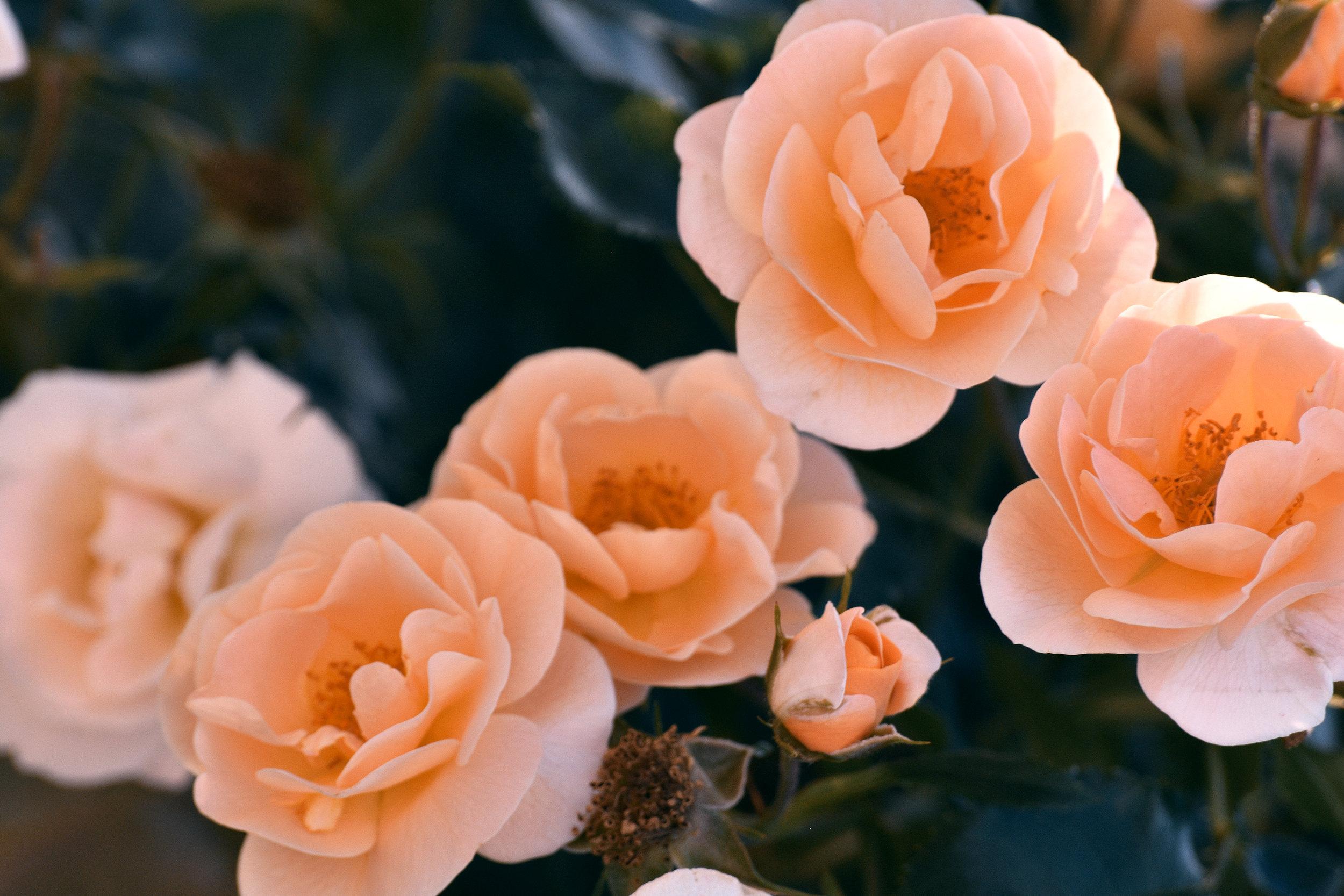 Fashion girl flowers small.jpg