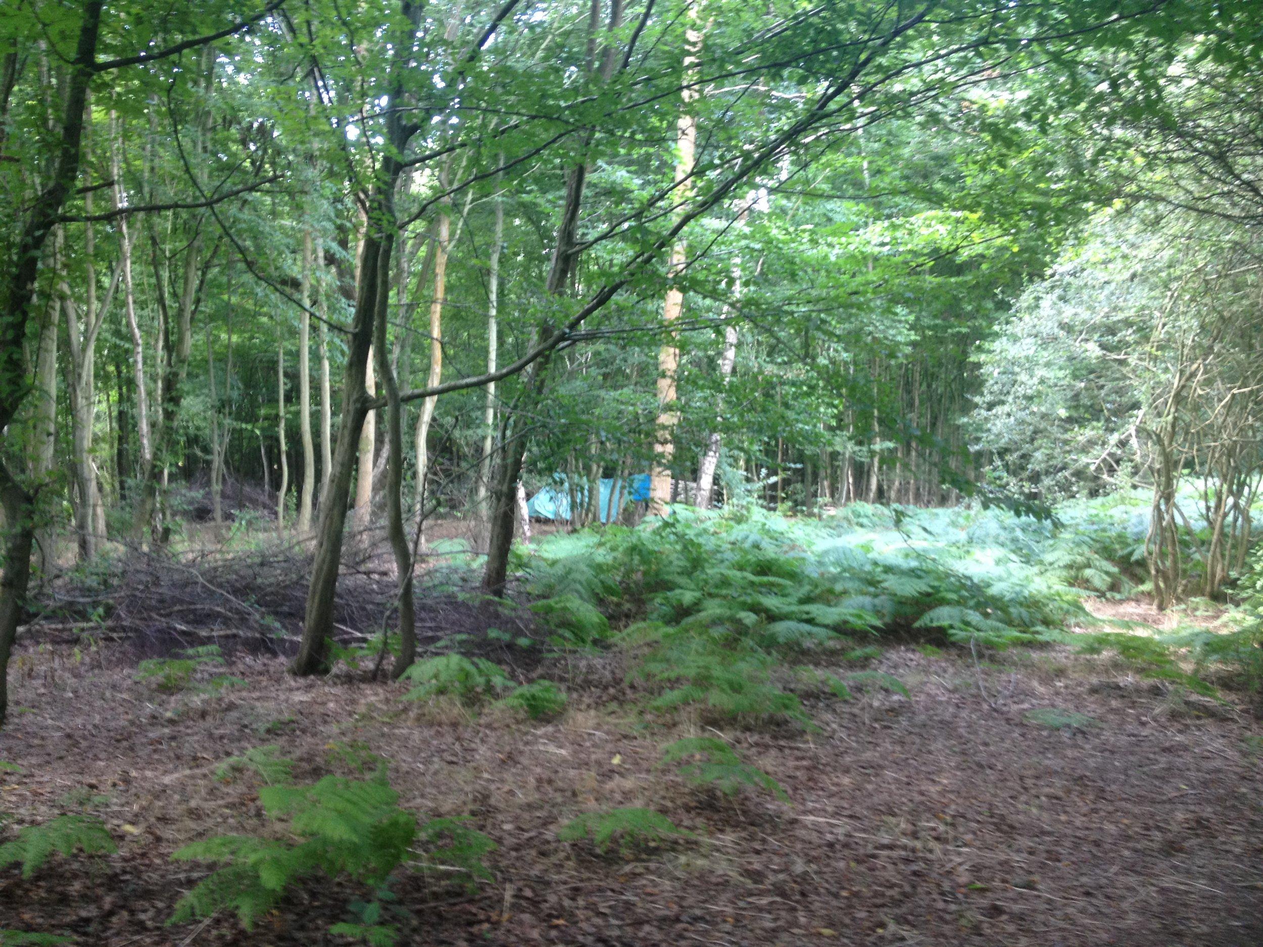 A lush woodland habitat