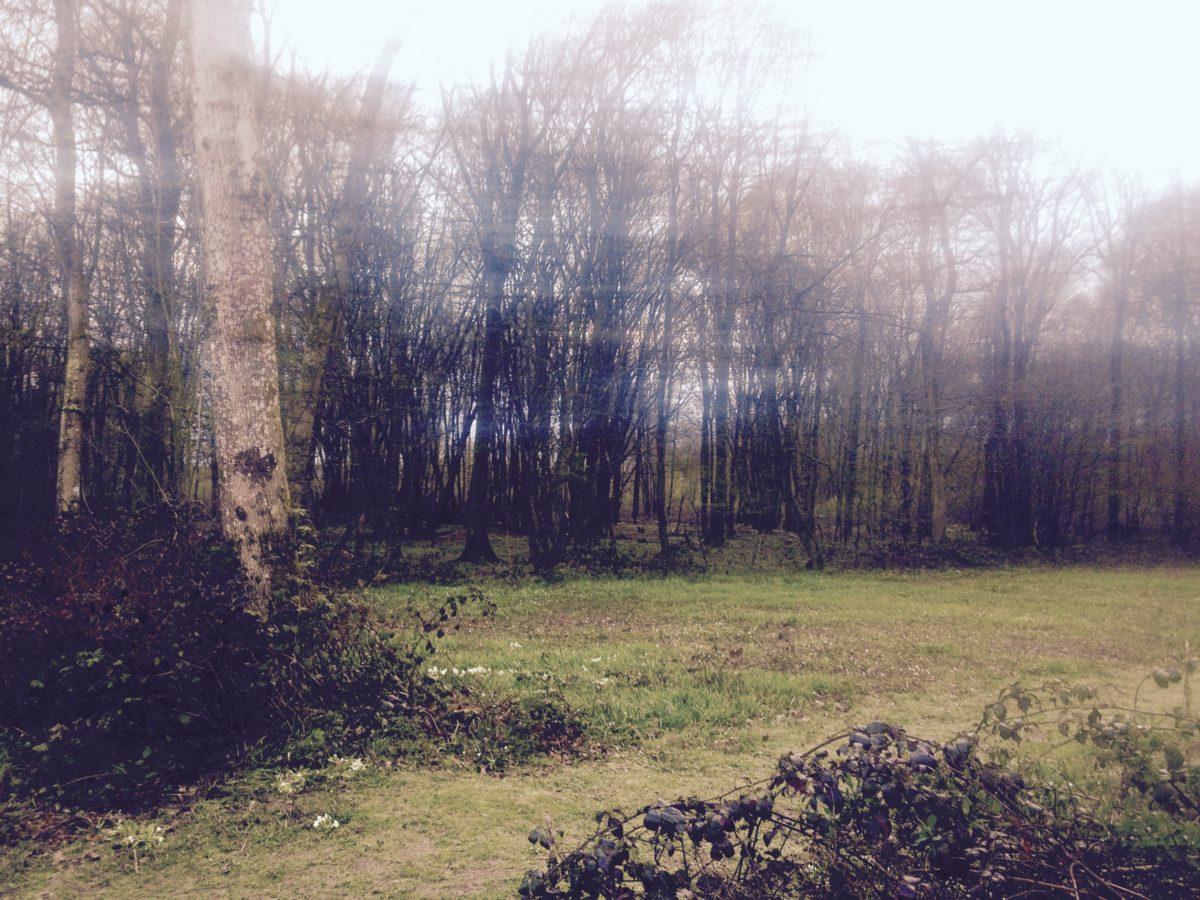 Explore ancient woodland