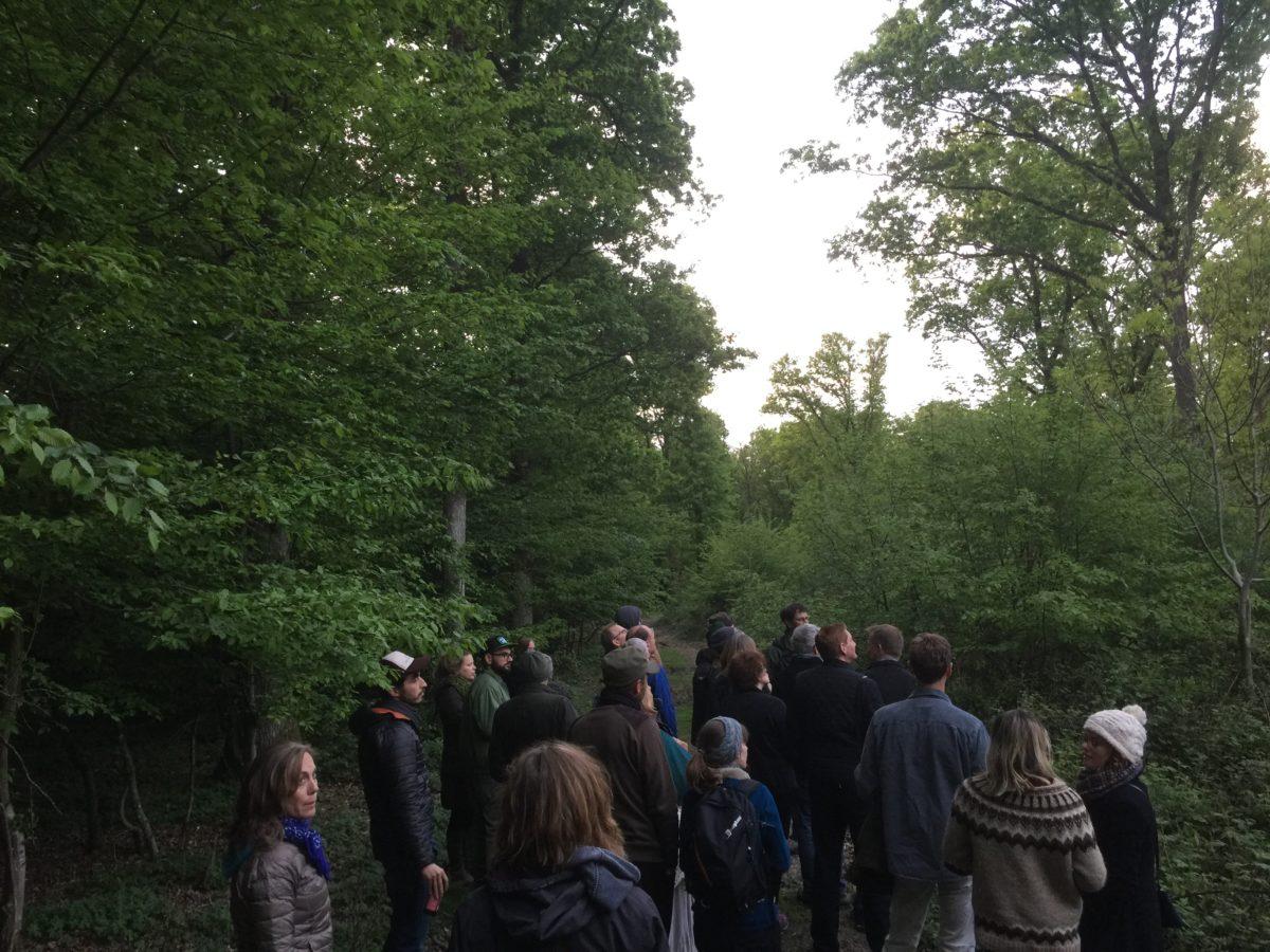 Follow the woodland trail