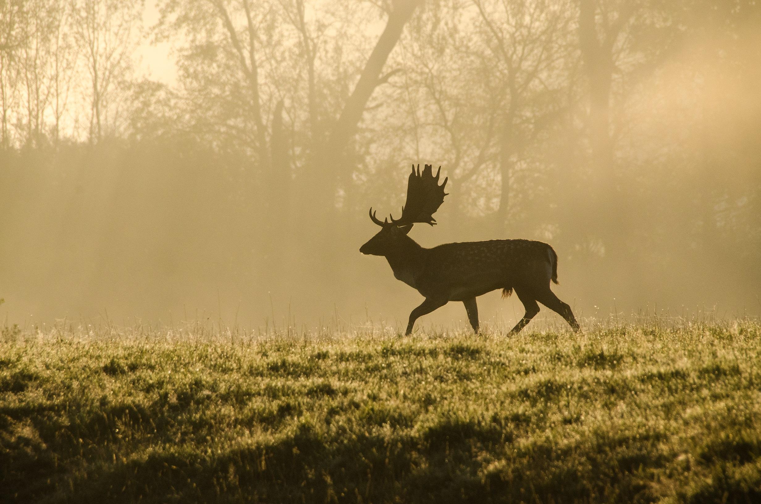 knepp deer.jpg