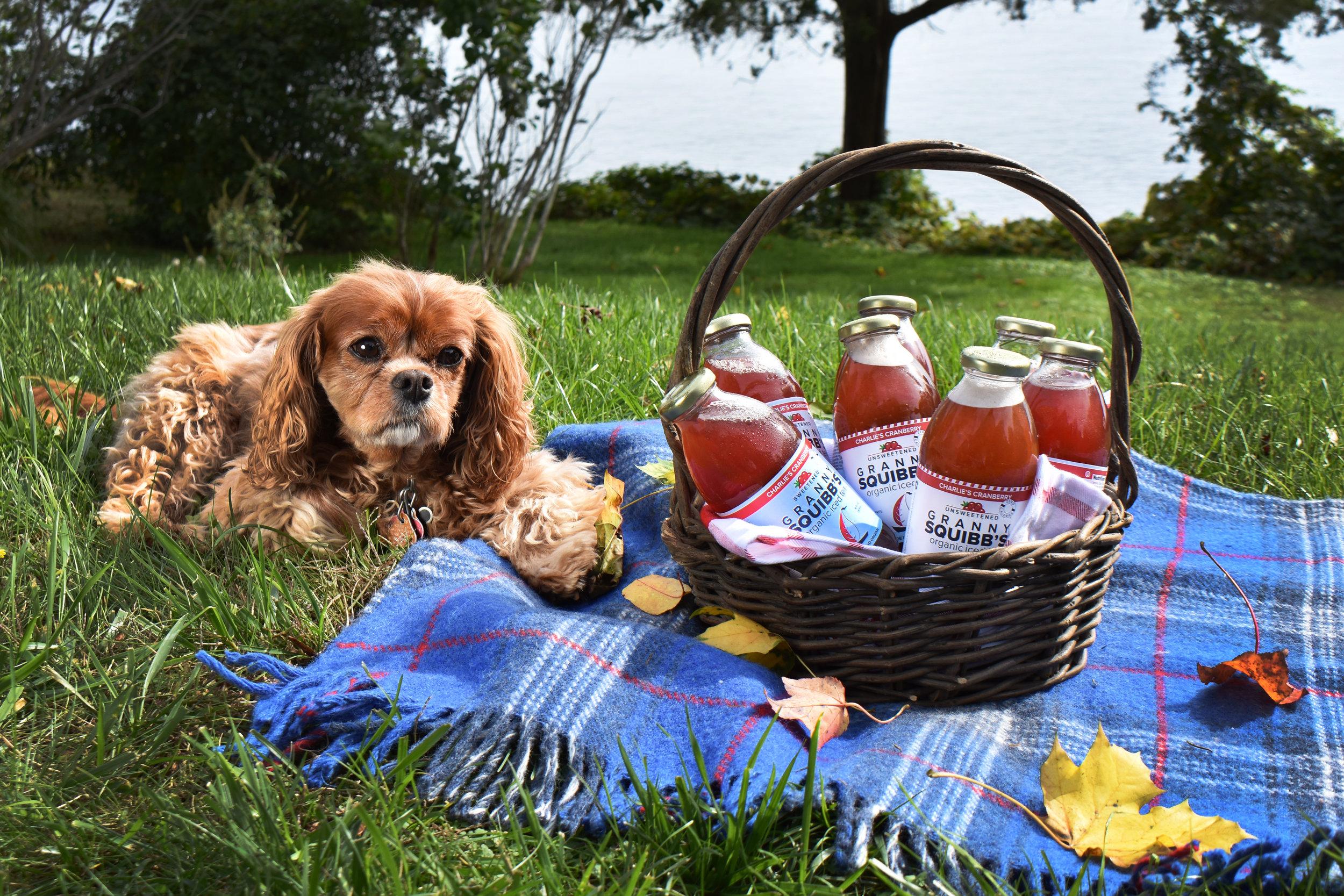 Charlie's Cranberry Granny Squibb's organic iced tea Charlie Picnic.jpg