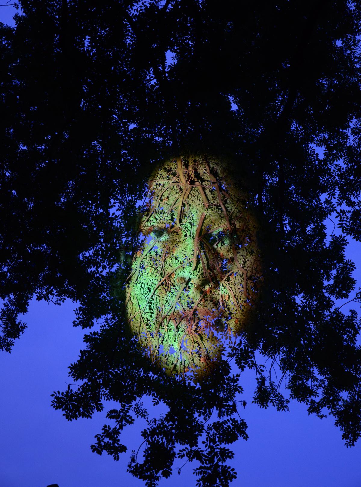tree face branch.jpg