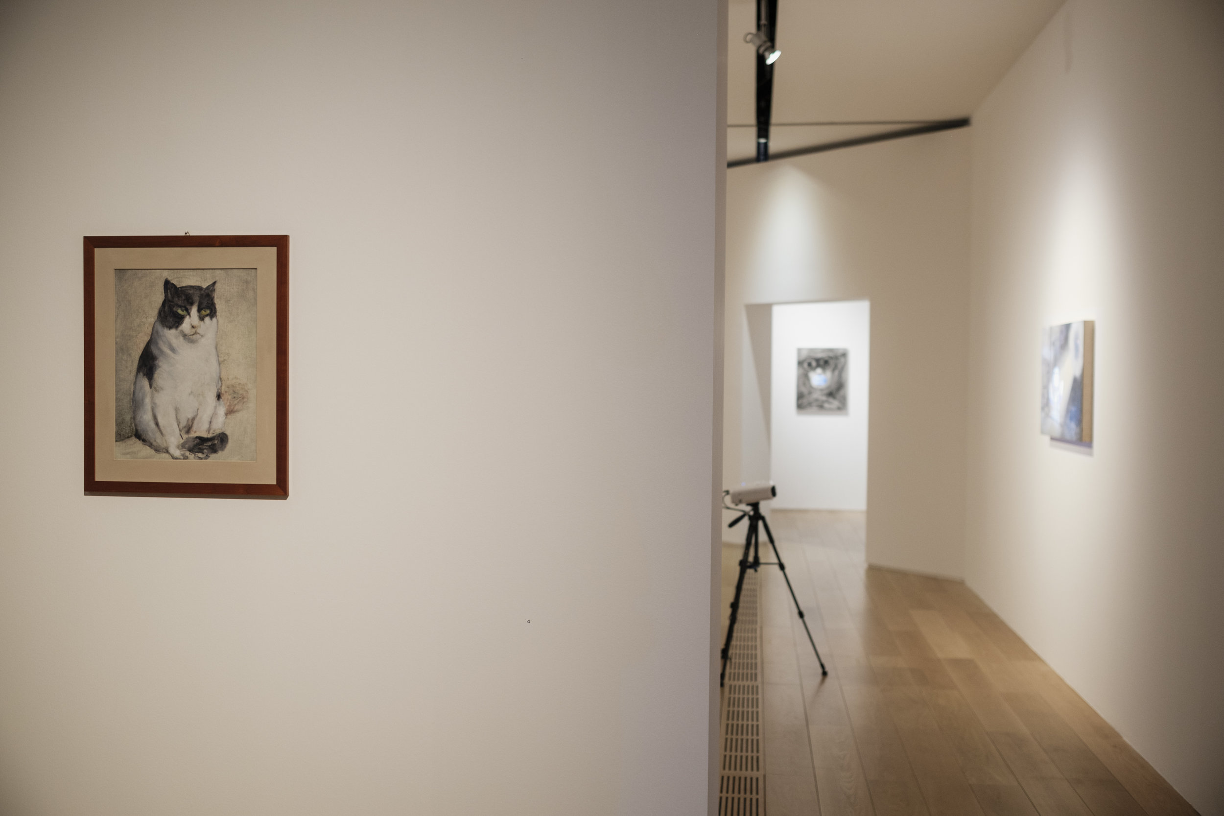 Installation view with Rol's cat