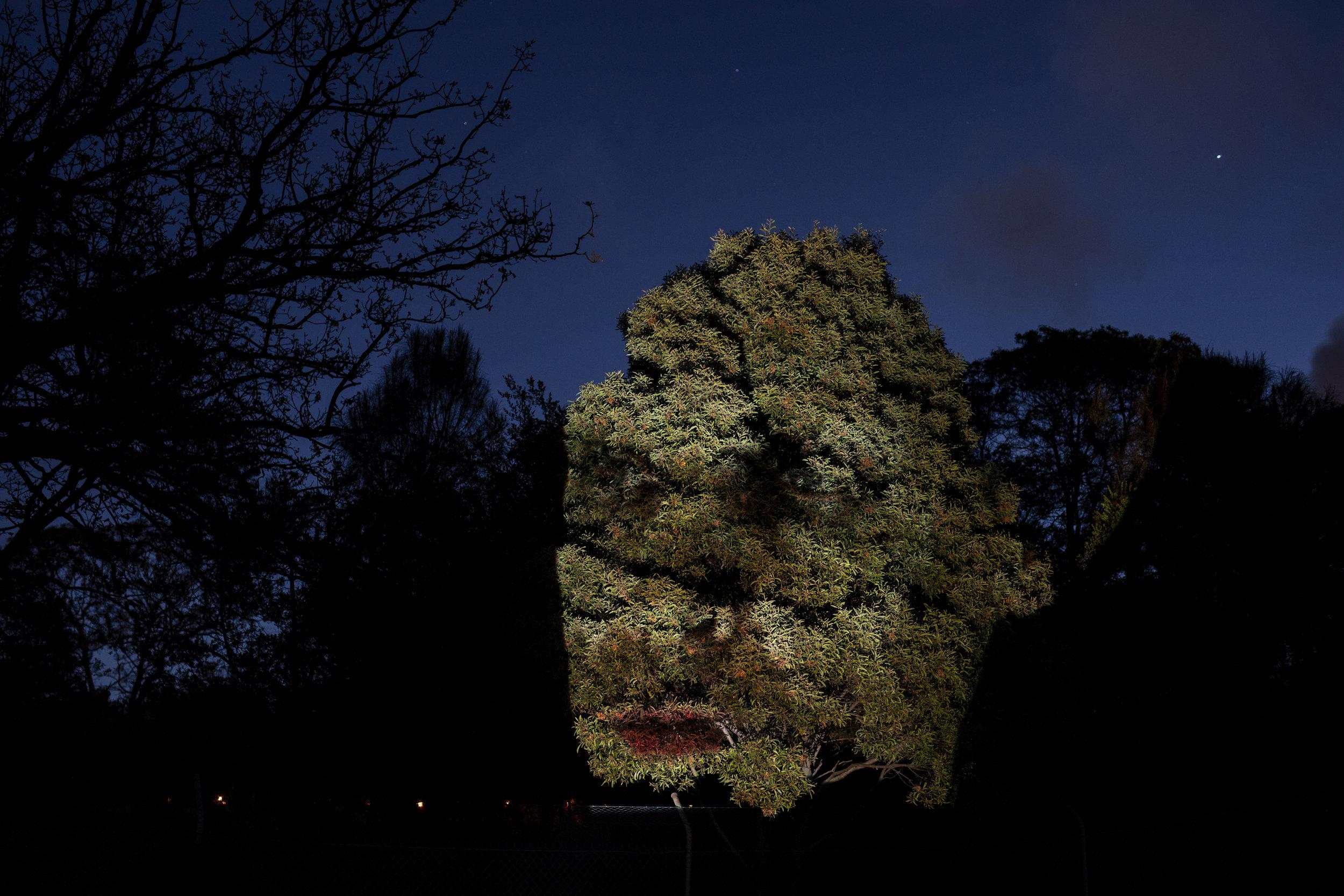 Photo Credit: Dark Mofo/Rémi Chauvin, 2019 Image Courtesy Dark Mofo, Hobart, Tasmania, Australia