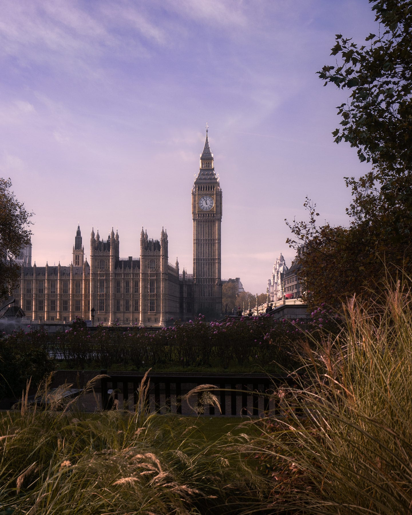 Big-Ben-Purple-WEB.jpg