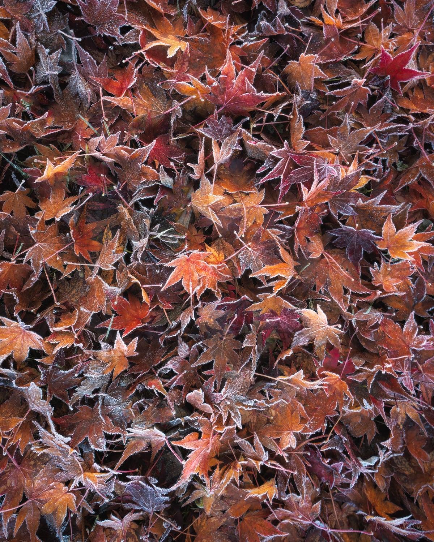 Leaf-Detail.jpg